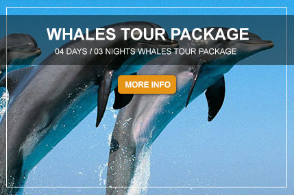 WHALES-TOUR-PACKAGE