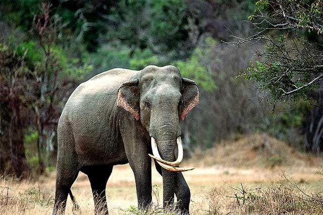 sri-lankan-wild-life7